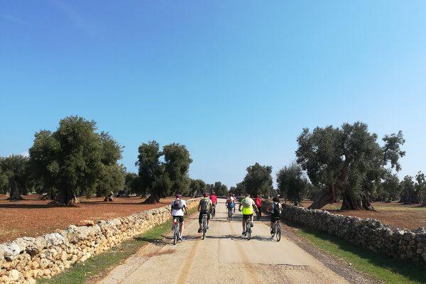 In bici tra gli olivi millenari Ostuni