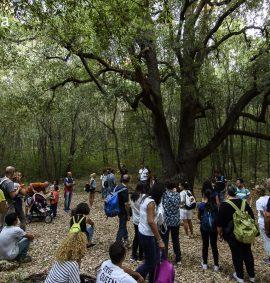 Visitatori del Bosco delle Pianelle
