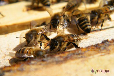 Le api e il miele