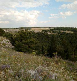pulicchio di Gravina in Puglia