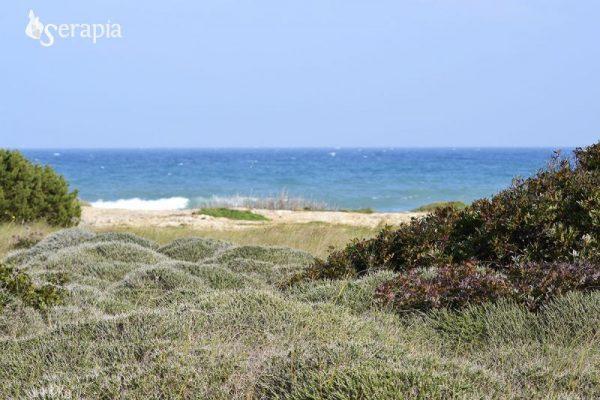 Macchia mediterranea a timo e lentisco