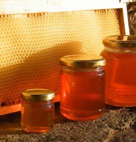le api e il miele coop. Serapia