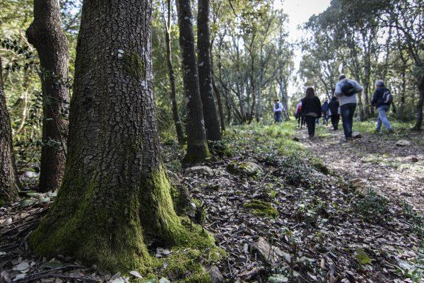 bosco nel bosco delle Pianelle