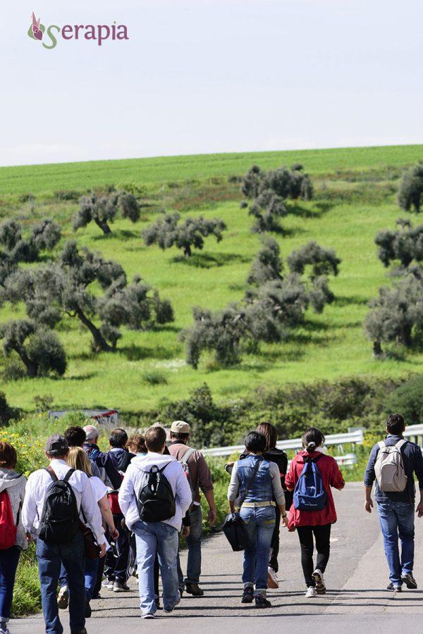 Castellaneta, oliveto monumentale ed escursione