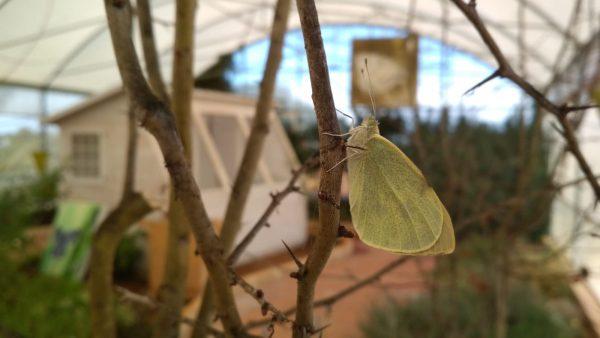 Interno casa delle farfalle