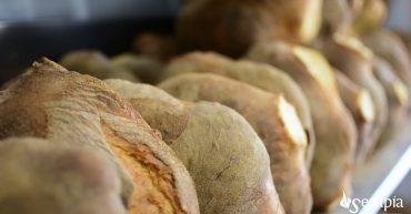 laterza: pane e focaccia. Appia il cammino dei sensi