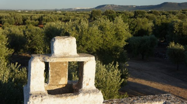 Piana Olivetata